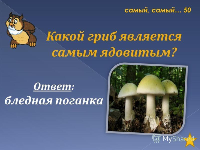 самый, самый… 50 Какой гриб является самым ядовитым? Ответ: бледная поганка