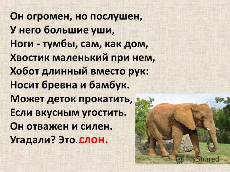 Он огромен, но послушен, У него большие уши, Ноги - тумбы, сам, как дом, Хвостик маленький при нем, Хобот длинный вместо рук: Носит бревна и бамбук. Может деток прокатить, Если вкусным угостить. Он отважен и силен. Угадали? Это… слон.