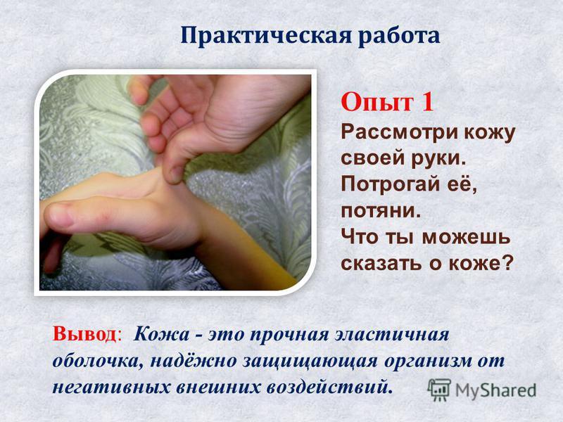 Опыт 1 Рассмотри кожу своей руки. Потрогай её, потяни. Что ты можешь сказать о коже? Вывод: Кожа - это прочная эластичная оболочка, надёжно защищающая организм от негативных внешних воздействий. Практическая работа