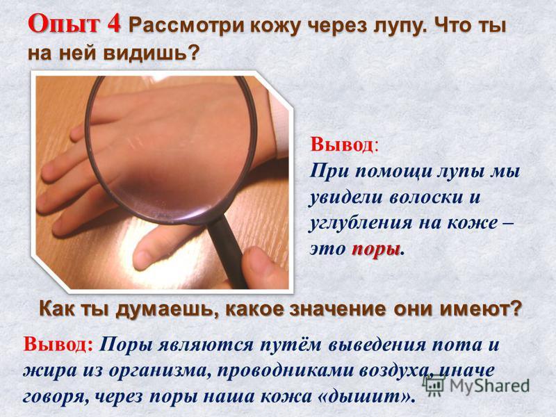 Опыт 4 Рассмотри кожу через лупу. Что ты на ней видишь? Вывод: При помощи лупы мы увидели волоски и углубления на коже – поры это поры. Вывод: Поры являются путём выведения пота и жира из организма, проводниками воздуха, иначе говоря, через поры наша