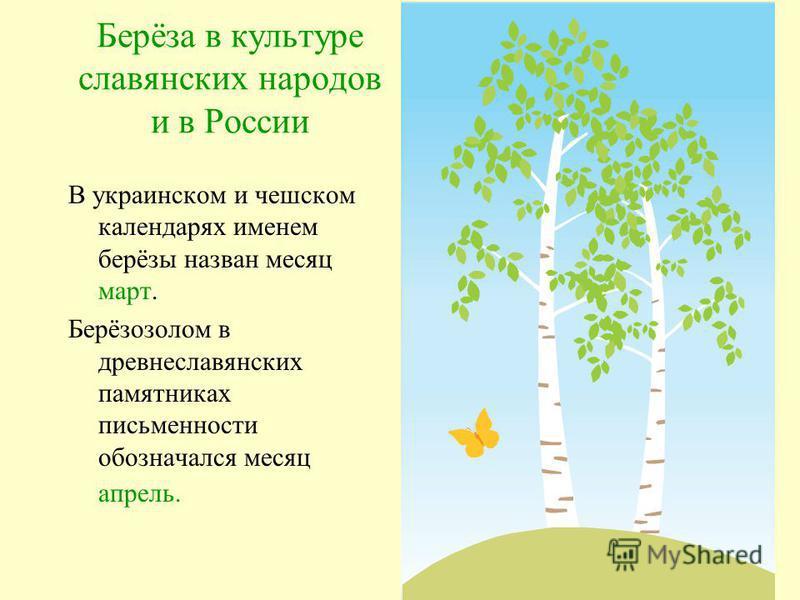 Народные приметы Из берёзы весной течёт много сока к дождливому лету Осенью листья берёз начнут желтеть с верхушки весна ранняя, зажелтеют снизу поздняя. Коли берёза наперёд опушается, то жди сухого лета, а коли ольха мокрого. Сей овёс, когда берёзов
