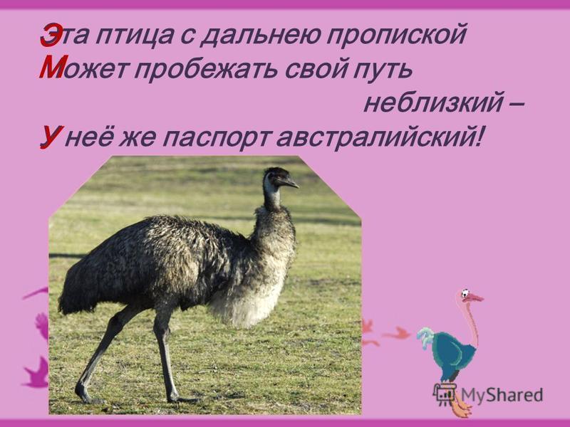 Эта птица с дальнею пропиской Может пробежать свой путь неблизкий – У неё же паспорт австралийский! Э М У