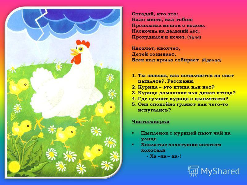 Отгадай, кто это: Надо мною, над тобою Проплывал мешок с водою. Наскочил на дальний лес, Прохудился и исчез. ( Туча) Квохчет, квохчет, Детей созывает, Всех под крыло собирает (Курица) 1. Ты знаешь, как появляются на свет цыплята?. Расскажи. 2. Курица