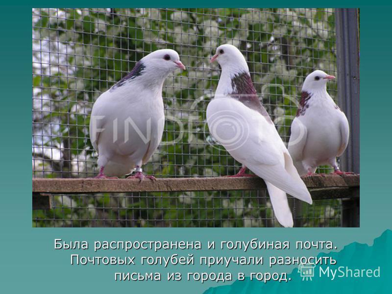 Была распространена и голубиная почта. Почтовых голубей приучали разносить письма из города в город.