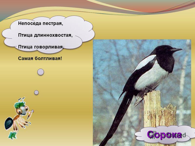 Сорока Сорока Непоседа пестрая, Птица длиннохвостая, Птица говорливая, Самая болтливая!