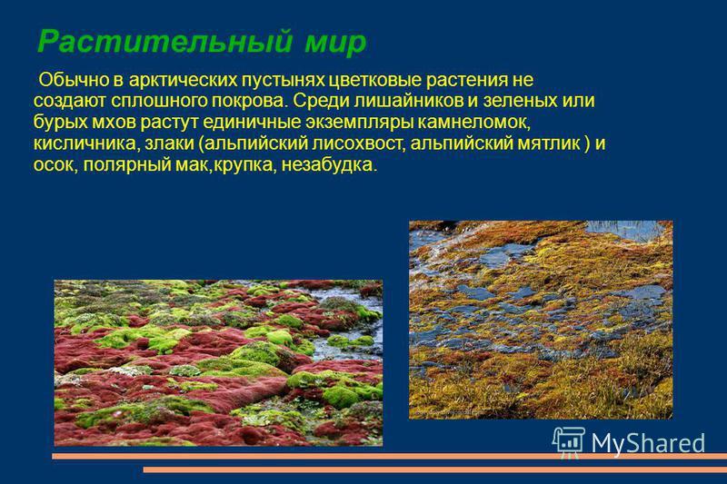 Растительный мир Обычно в арктических пустынях цветковые растения не создают сплошного покрова. Среди лишайников и зеленых или бурых мхов растут единичные экземпляры камнеломок, кисличника, злаки (альпийский лисохвост, альпийский мятлик ) и осок, пол