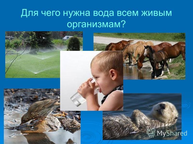 Для чего нужна вода всем живым организмам?
