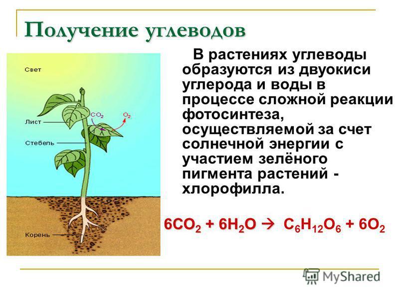 Получение углеводов В растениях углеводы образуются из двуокиси углерода и воды в процессе сложной реакции фотосинтеза, осуществляемой за счет солнечной энергии с участием зелёного пигмента растений - хлорофилла. 6СО 2 + 6Н 2 О 6СО 2 + 6Н 2 О С 6 Н 1