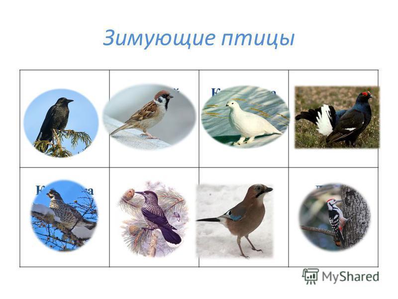 Зимующие птицы Ворона ВоробейКуропаткаГлухарь КедровкаСойкаРябчикДятел