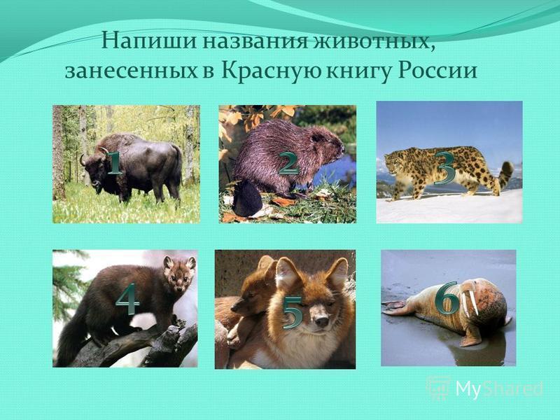 Напиши названия животных, занесенных в Красную книгу России