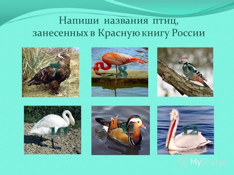 Напиши названия птиц, занесенных в Красную книгу России