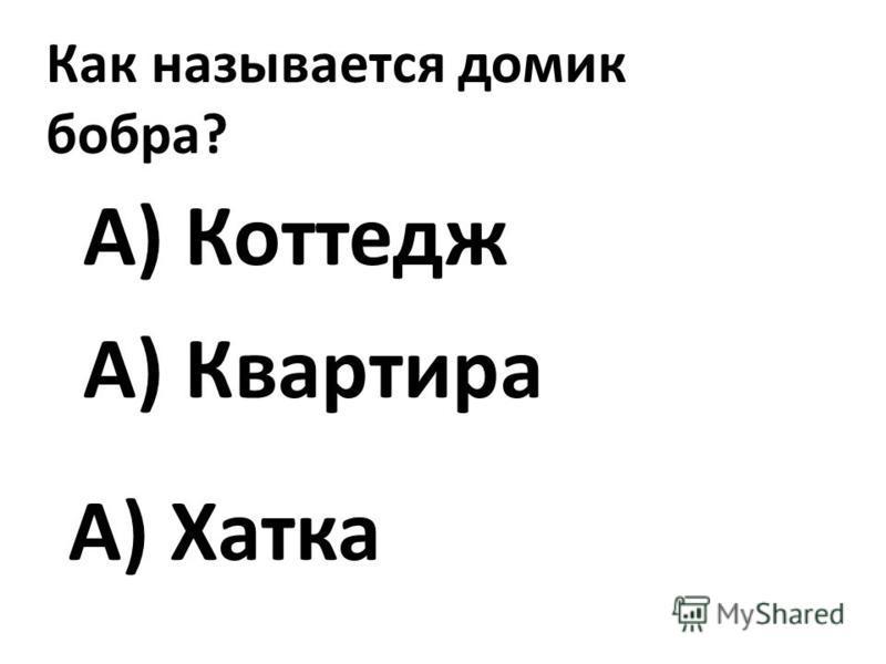 Как называется домик бобра? А) Хатка А) Коттедж А) Квартира