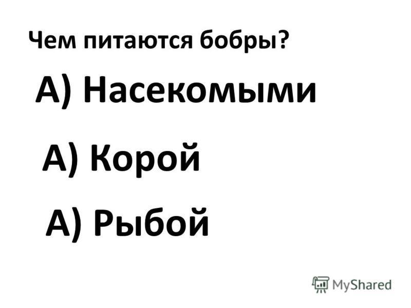 Чем питаются бобры? А) Насекомыми А) Рыбой А) Корой