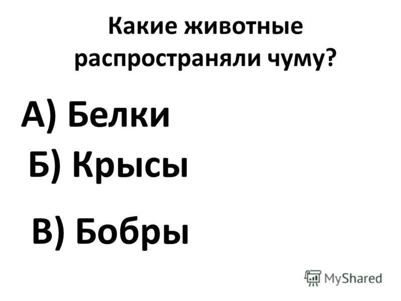 Какие животные распространяли чуму? А) Белки В) Бобры Б) Крысы