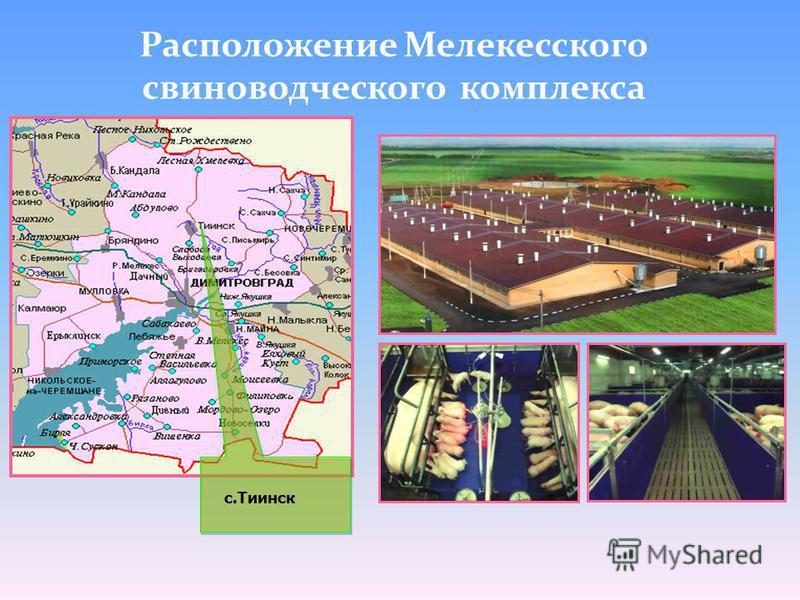 с.Тиинск Расположение Мелеткесского свиноводческого комплеткса