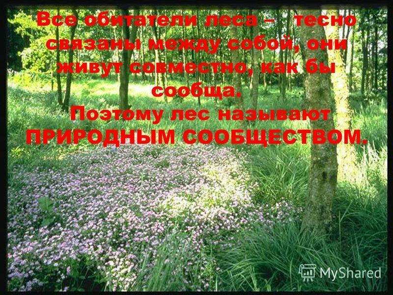Все обитатели леса – тесно связаны между собой, они живут совместно, как бы сообща. Поэтому лес называют ПРИРОДНЫМ СООБЩЕСТВОМ.