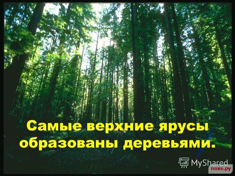 Самые верхние ярусы образованы деревьями.