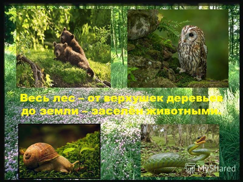 Весь лес – от верхушек деревьев до земли – заселён животными.