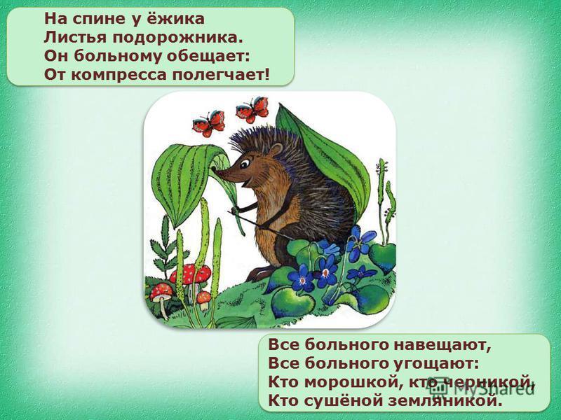 На спине у ёжика Листья подорожника. Он больному обещает: От компресса полегчает! Все больного навещают, Все больного угощают: Кто морошкой, кто черникой, Кто сушёной земляникой.