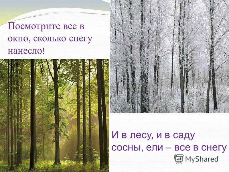 Посмотрите все в окно, сколько снегу нанесло ! И в лесу, и в саду сосны, ели – все в снегу