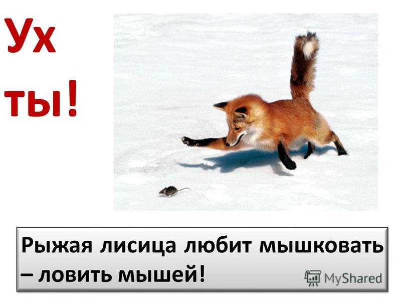 Ух ты! Рыжая лисица любит мышковать – ловить мышей!