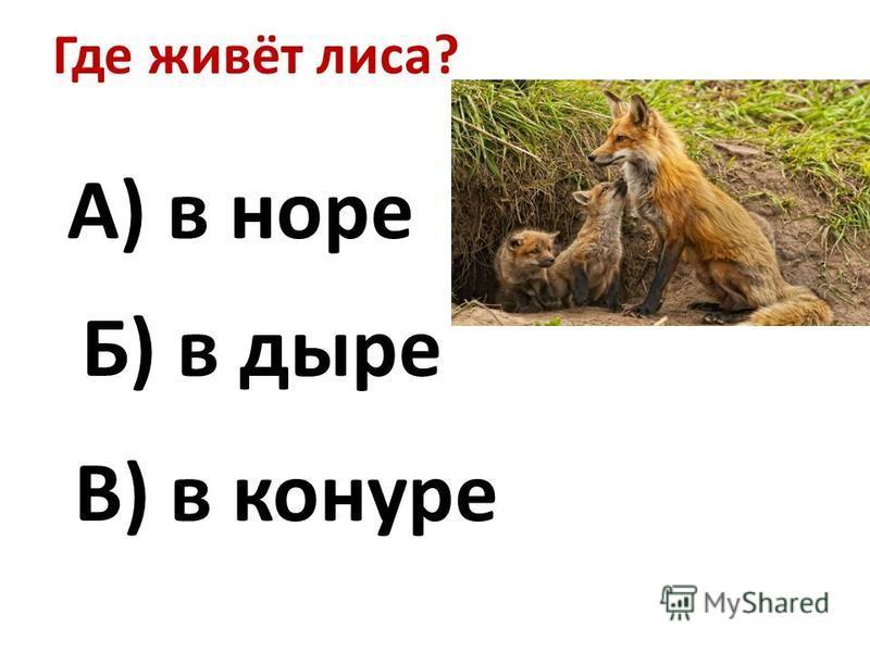 Где живёт лиса? А) в норе Б) в дыре В) в конуре