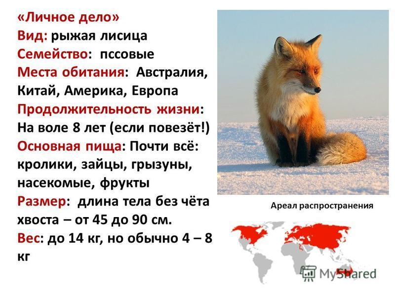 «Личное дело» Вид: рыжая лисица Семейство: псовые Места обитания: Австралия, Китай, Америка, Европа Продолжительность жизни: На воле 8 лет (если повезёт!) Основная пища: Почти всё: кролики, зайцы, грызуны, насекомые, фрукты Размер: длина тела без чёт