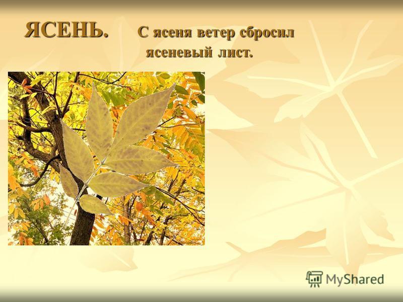 ЯСЕНЬ. С ясеня ветер сбросил ясеневый лист.