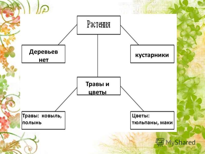 Деревьев нет Травы и цветы кустарники Травы: ковыль, полынь Цветы: тюльпаны, маки
