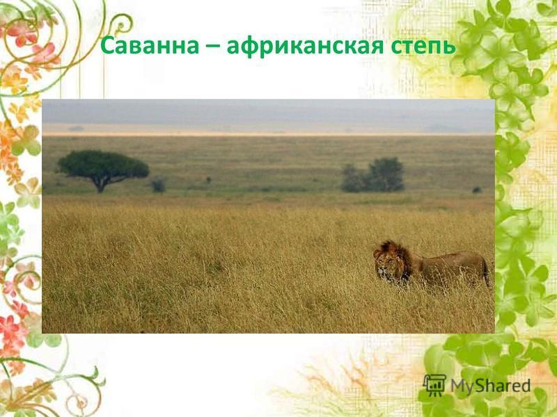 Саванна – африканская степь