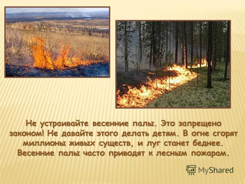 Не устраивайте весенние палы. Это запрещено законом! Не давайте этого делать детям. В огне сгорят миллионы живых существ, и луг станет беднее. Весенние палы часто приводят к лесным пожарам.