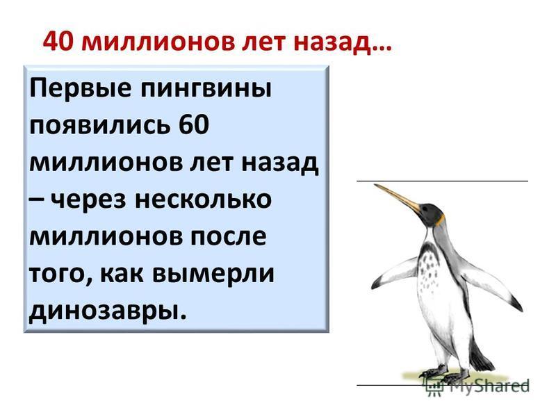 40 миллионов лет назад… Первые пингвины появились 60 миллионов лет назад – через несколько миллионов после того, как вымерли динозавры.