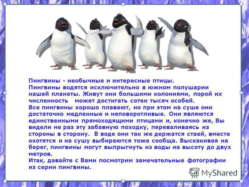 Пингвины - необычные и интересные птицы. Пингвины водятся исключительно в южном полушарии нашей планеты. Живут они большими колониями, порой их численность может достигать сотен тысяч особей. Все пингвины хорошо плавают, но при этом на суше они доста