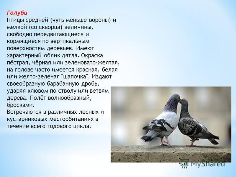 Голуби Птицы средней (чуть меньше вороны) и мелкой (со скворца) величины, свободно передвигающиеся и кормящиеся по вертикальным поверхностям деревьев. Имеют характерный облик дятла. Окраска пёстрая, чёрная или зеленовато-желтая, на голове часто имеет