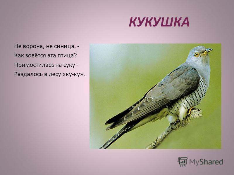 КУКУШКА Не ворона, не синица, - Как зовётся эта птица? Примостилась на суку - Раздалось в лесу «ку-ку».