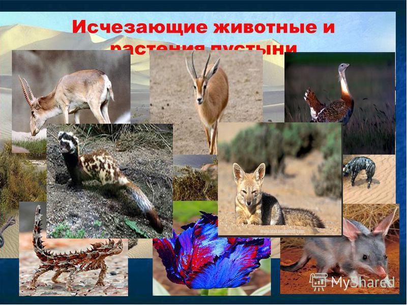 Исчезающие животные и растения пустыни