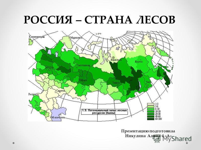 РОССИЯ – СТРАНА ЛЕСОВ Презентацию подготовила Никулина Алина 4 «А»