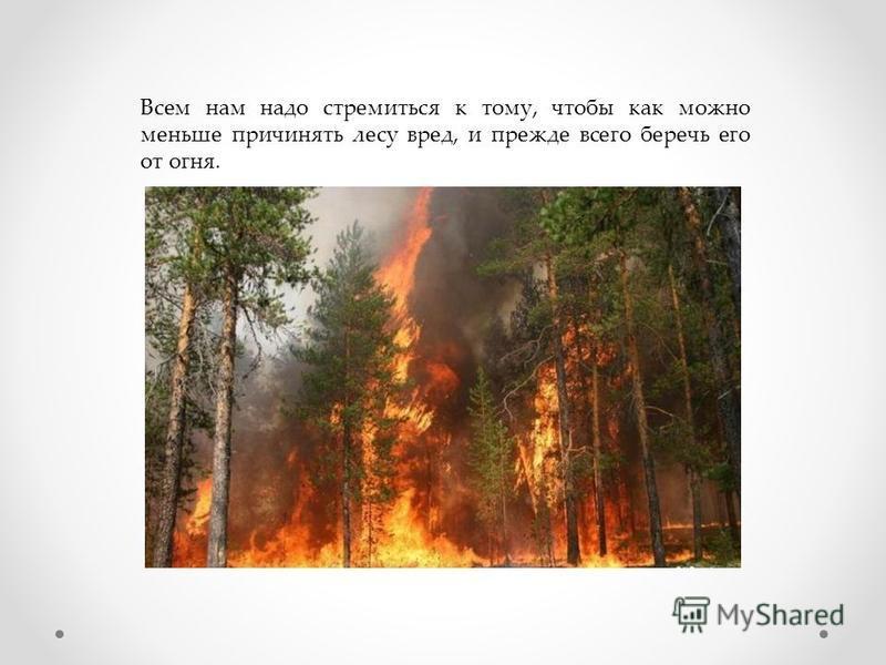 Всем нам надо стремиться к тому, чтобы как можно меньше причинять лесу вред, и прежде всего беречь его от огня.