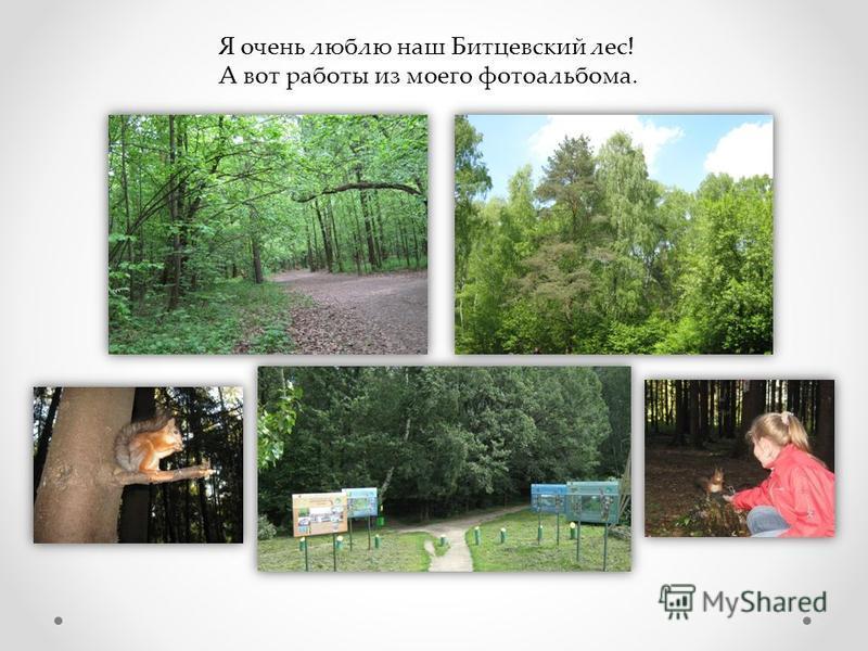 Я очень люблю наш Битцевский лес! А вот работы из моего фотоальбома.