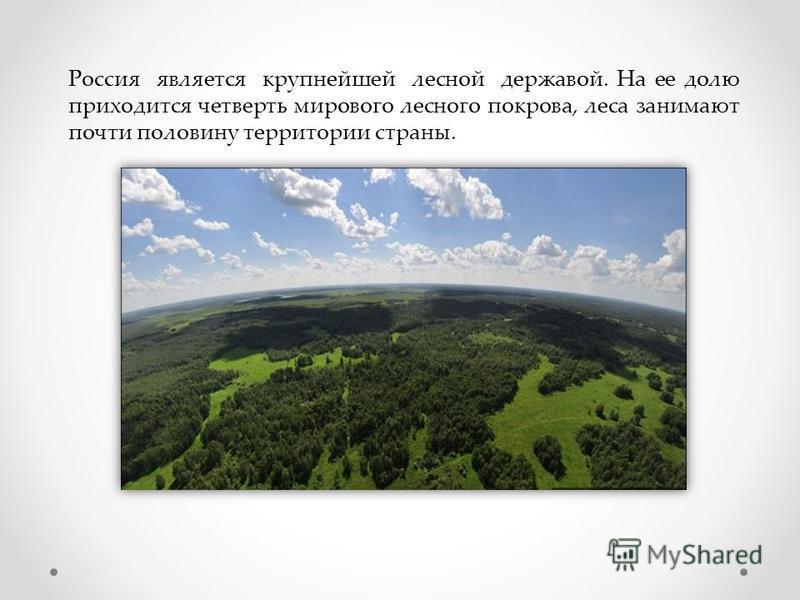 Россия является крупнейшей лесной державой. На ее долю приходится четверть мирового лесного покрова, леса занимают почти половину территории страны.