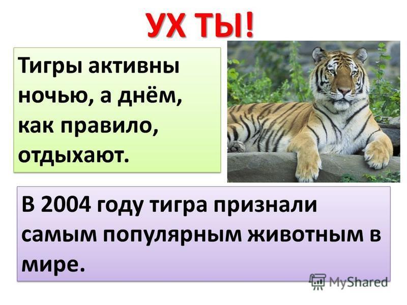 УХ ТЫ! Тигры активны ночью, а днём, как правило, отдыхают. В 2004 году тигра признали самым популярным животным в мире.