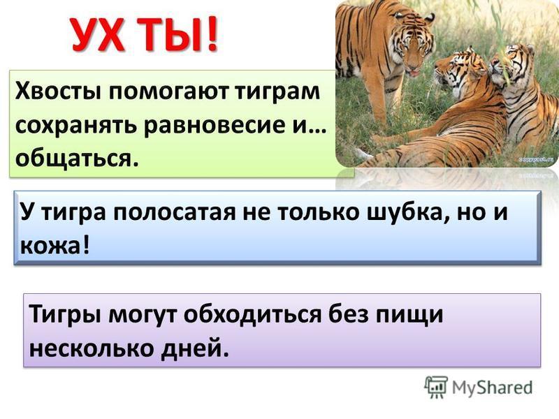УХ ТЫ! У тигра полосатая не только шубка, но и кожа!