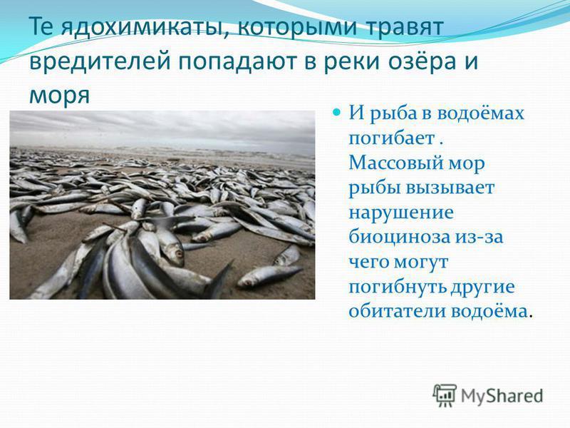 Те ядохимикаты, которыми травят вредителей попадают в реки озёра и моря И рыба в водоёмах погибает. Массовый мор рыбы вызывает нарушение биоценоза из-за чего могут погибнуть другие обитатели водоёма.