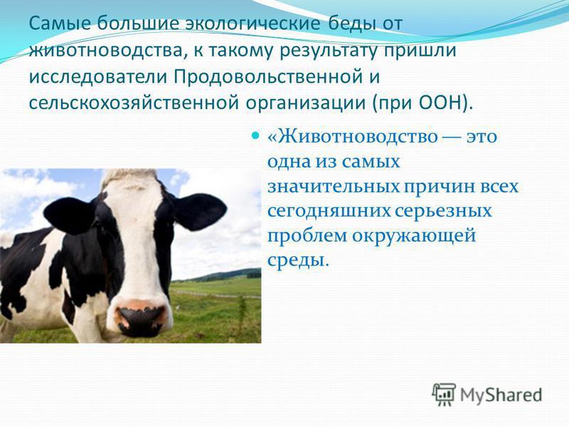Самые большие экологические беды от животноводства, к такому результату пришли исследователи Продовольственной и сельскохозяйственной организации (при ООН). «Животноводство это одна из самых значительных причин всех сегодняшних серьезных проблем окру