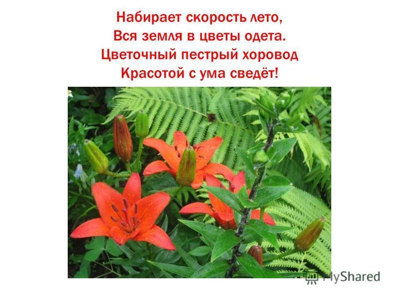 Набирает скорость лето, Вся земля в цветы одета. Цветочный пестрый хоровод Красотой с ума сведёт!