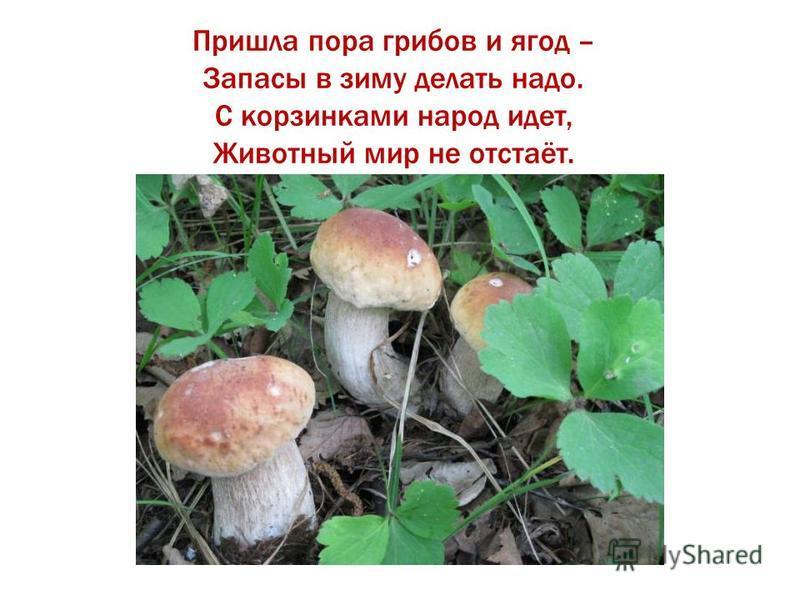 Пришла пора грибов и ягод – Запасы в зиму делать надо. С корзинками народ идет, Животный мир не отстаёт.