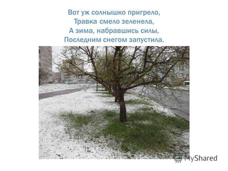 Вот уж солнышко пригрело, Травка смело зеленела, А зима, набравшись силы, Последним снегом запустила.