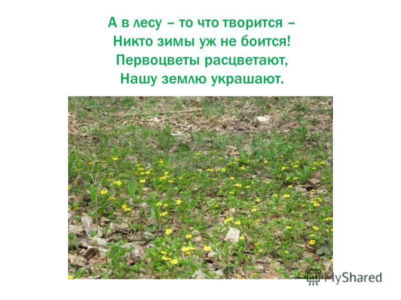 А в лесу – то что творится – Никто зимы уж не боится! Первоцветы расцветают, Нашу землю украшают.