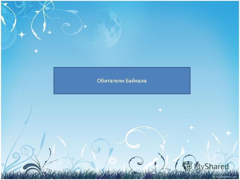 PRESENTATION NAME Company Name Обитатели Байкала