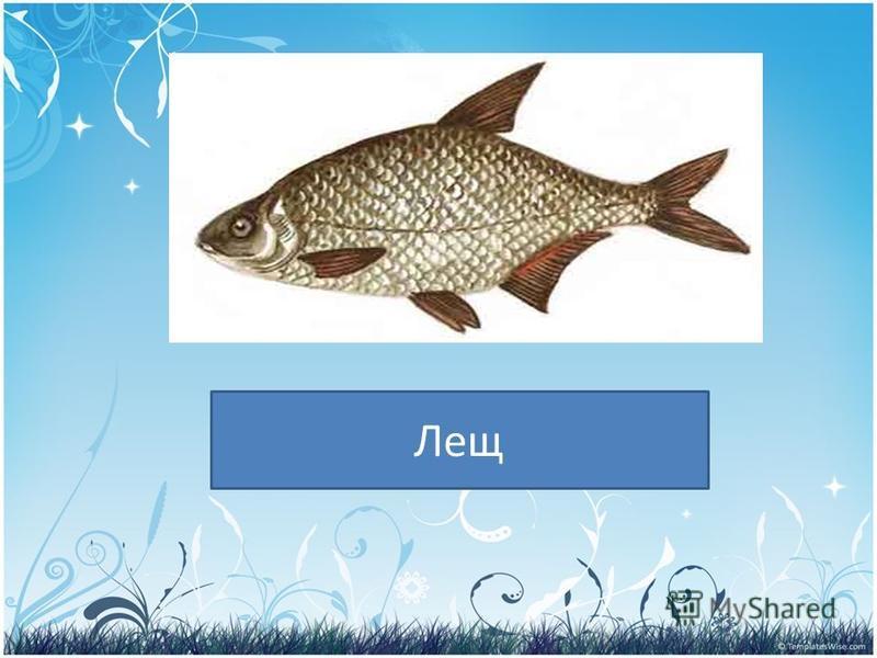 PRESENTATION NAME Company Name Лещ